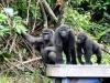 Gabon u. Kongo/DRC